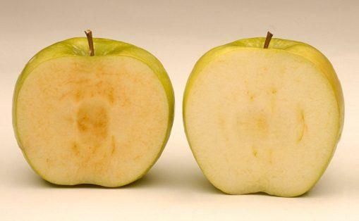【食べたくない】茶色にならない遺伝子組み換えリンゴ、米農務省が認可!2016年後半から順次市場に投入へ!|真実を探すブログhttp://saigaijyouhou.com/blog-entry-5571.h...