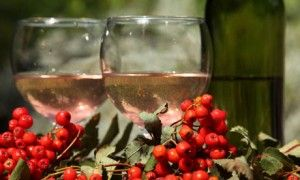 Mountain Ash, Rowan by GREEN DEANE in ALCOHOL,BEVERAGE,EDIBLE RAW,FRUITS/BERRIES,JAM/JELLY,MEDICINAL,PLANT USES,PLANTS,TREES/SHRUBS  America...