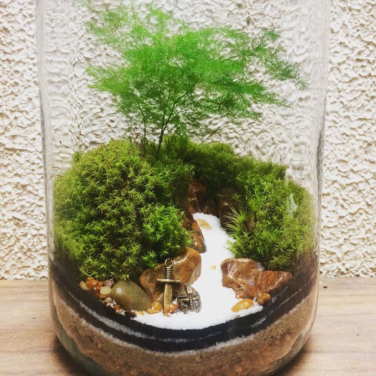 Mahmut Kırnık Bonsai Tree Pinterest Terrarium And Mini