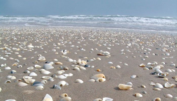 Best Beaches in Texas | Tripping.com | San Jose Island | Port Aransas