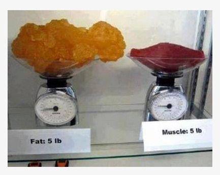 """Un'immagine eloquente che illumina sulla questione del peso della massa magra (muscolo scheletrico) e massa grassa!! Nella foto, 5lb (2,3KG) di Grasso sono ben più voluminose di 5lb di Muscolo: ecco perché, con gli allenamenti, pur osservando un rilevante miglioramento estetico, il peso spesso resta invariato! Per avere certezze sulla reale diminuzione di """"grasso"""" corporeo, affidatevi a metodologie di misurazione corporea che vadano a calcolare la percentuale di massa grassa e di massa…"""