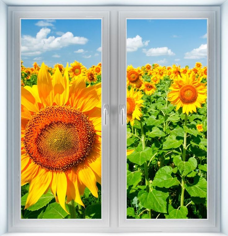 Majestic Wall Art - Sunflowers Under Blue Sky Instant Window, $44.00 (http://www.majesticwallart.com/instant-windows/sunflowers-under-blue-sky-instant-window)