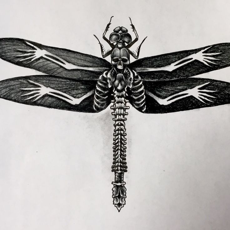17 Best Images About Tattoos On Pinterest Dragonfly