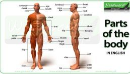 Parts of the Body in English Video