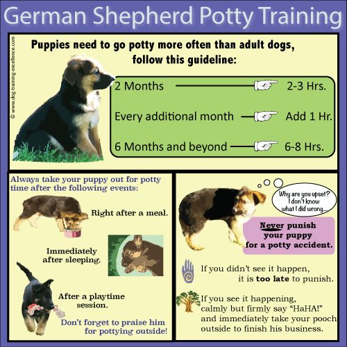 And there ya have it..Potty training german shepherds