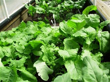 Heirloom Produce - www.rascalandcrowfarm.com