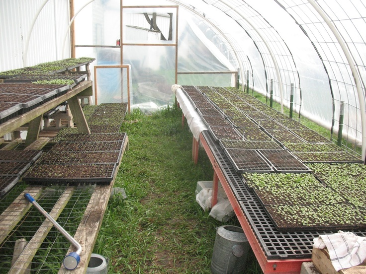Hoop house green house