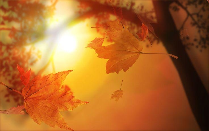 Download HD die Sonne den Herbst-Baum-Blatt-Einzelnen 1920x1080 - Kostenlos Hintergrundbilder