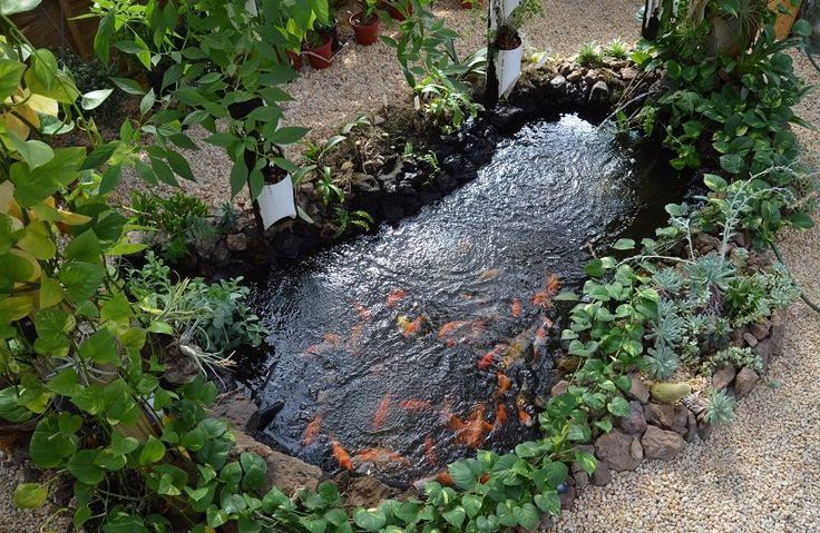 1081 best hydroponics aquaculture vermiponics for Koi aquaponics