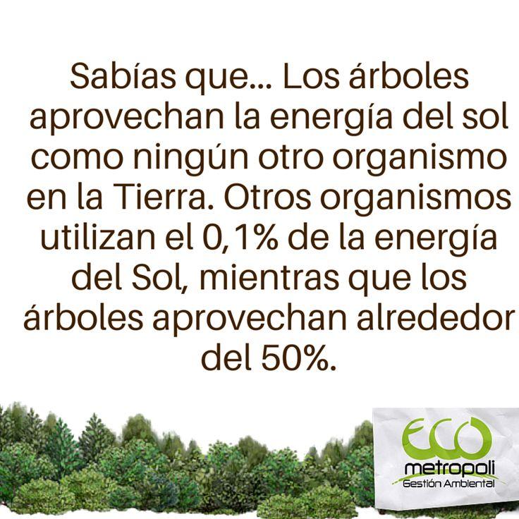 #DatoCurioso #Árboles #Eco