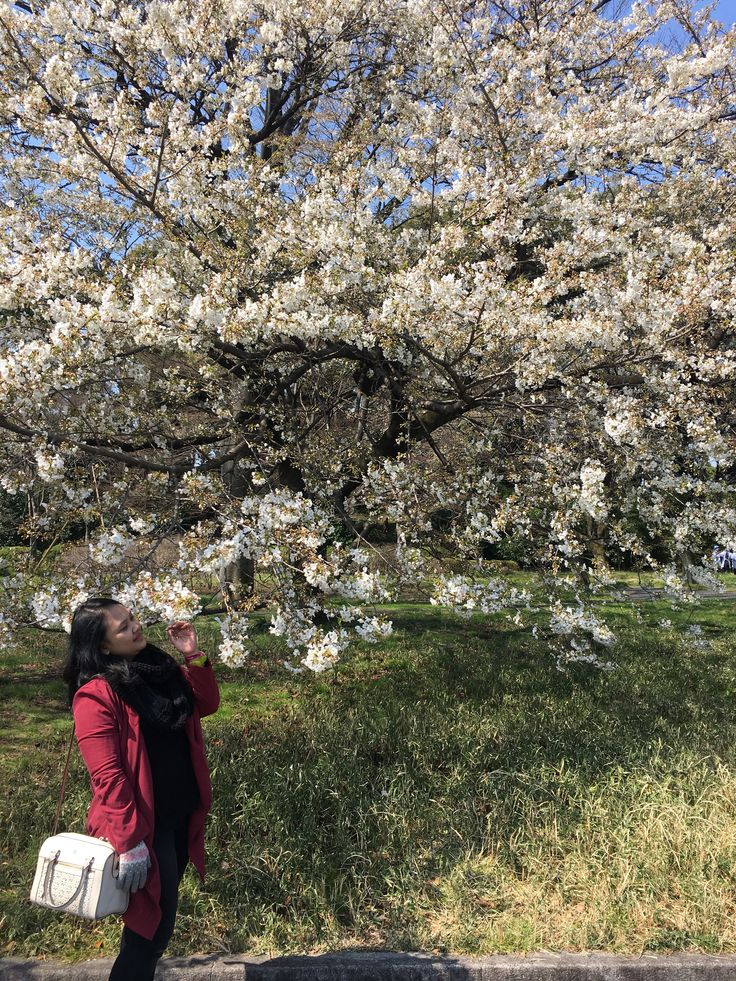 Another cherry blossoms   #cherryblossom #japan