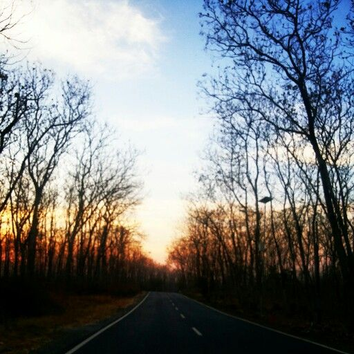 Another view on my way to Baluran National Park. I love nature... #forest #sunrise