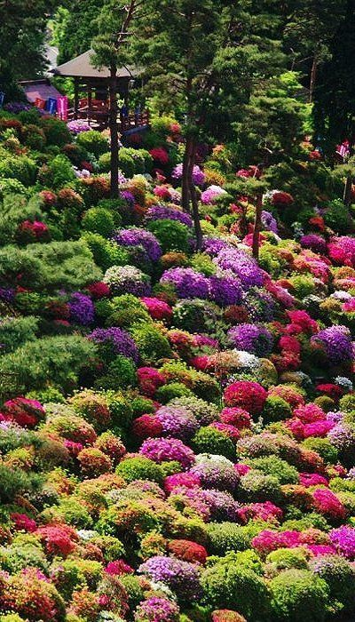 Azalea bushes at Shiofune Kannon Temple, Tokyo, Japan The temple is dedicated to the bodhisattva Kannon