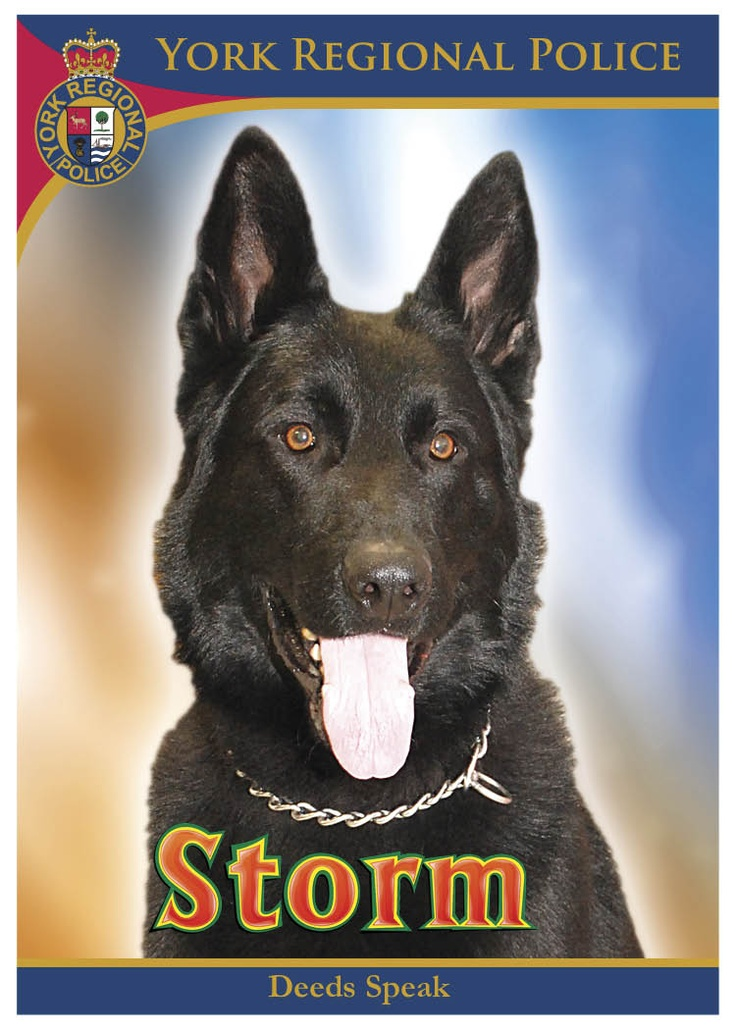 12 Best Police Service Dogs Images On Pinterest  German -3269