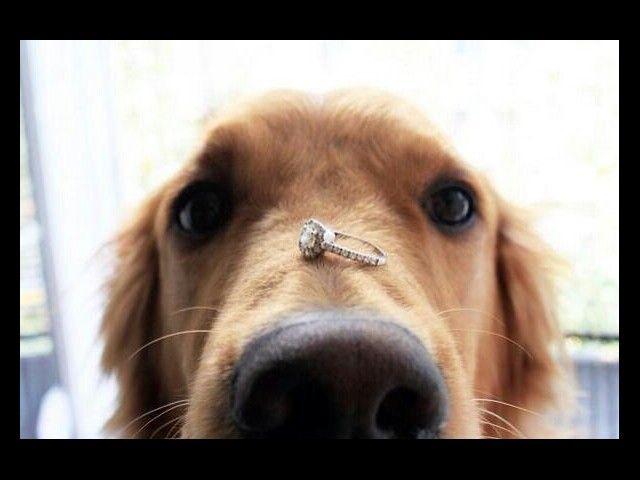 Te casarias conmigo?