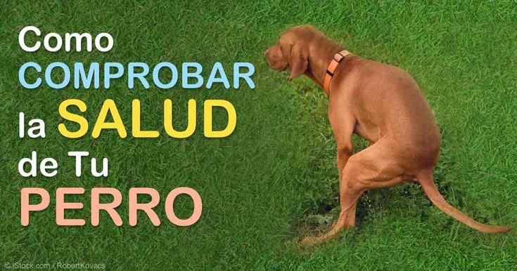 Dado que perros no pueden avisarnos cuando tienen un mal digestivo, monitorear sus heces es una excelente manera para estar al tanto de la salud de tu perro. http://mascotas.mercola.com/sitios/mascotas/archivo/2015/07/15/evaluar-heces-de-perro.aspx