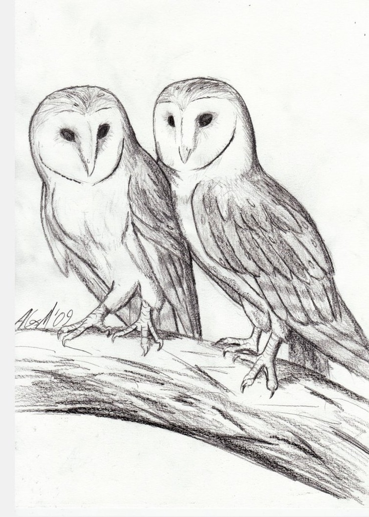 Line Drawing Sketches : Images about owl sketches on pinterest great