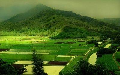 Green fields wallpaper