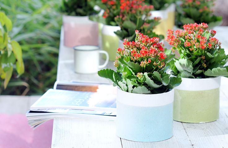 Welke kamerplanten kun je in de zomer buiten op je balkon of terras zetten?