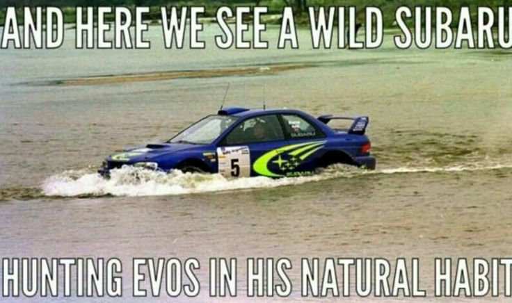 And here we see a wild subaru hunting evos in his natural habitat