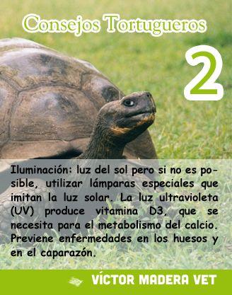 Consejo Victor Madera - Tortugas 2: Iluminación: La luz solar es vital para cualquier ser vivo. En el caso de las tortugas, les aporta vitamina D3, necesaria para fortalecer el caparazón. En caso de que no sea posible, se recomienda utilizar luz ultra-violeta artificial, aunque siempre será desaconsejable.