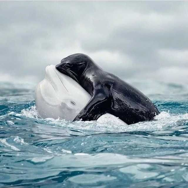 Seal and dolphin love - Imgur