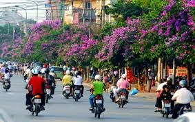 #Hanoi streets in May are bursting with purple flowers called hao bang lang - quite spectacular