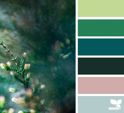 Forest: Complimentary colors are pastel pink and blue with bold blue and lime