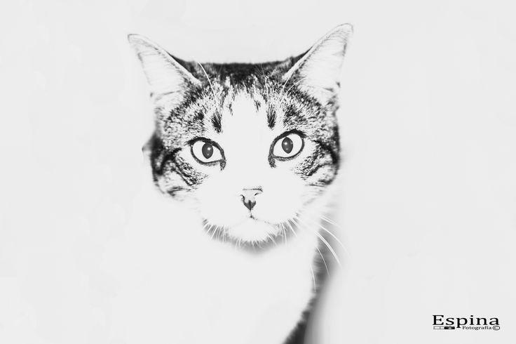 https://flic.kr/p/QP5sQT | Gato en clave alta | He estudiado muchos filósofos y muchos gatos. La sabiduría de los gatos es infinitamente superior. Hippolyte Taine
