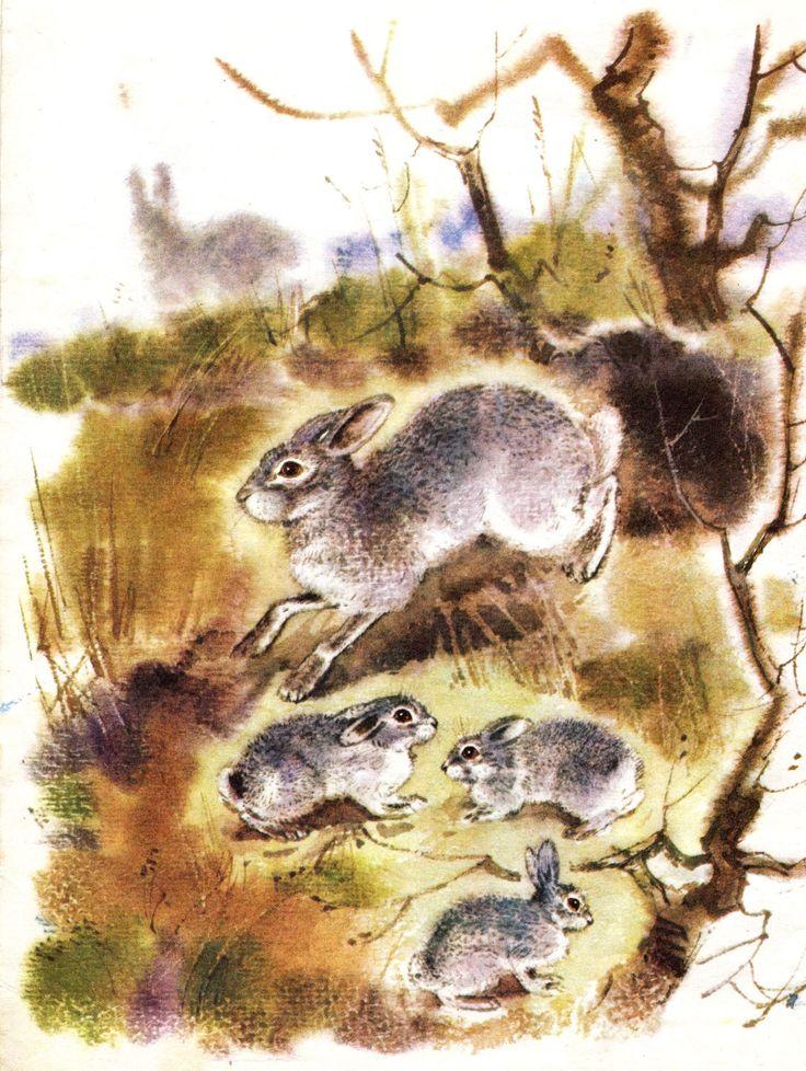 """И. Акимушкин. """"Чем кролик на зайца не похож"""". Иллюстрации С. Куприянова."""