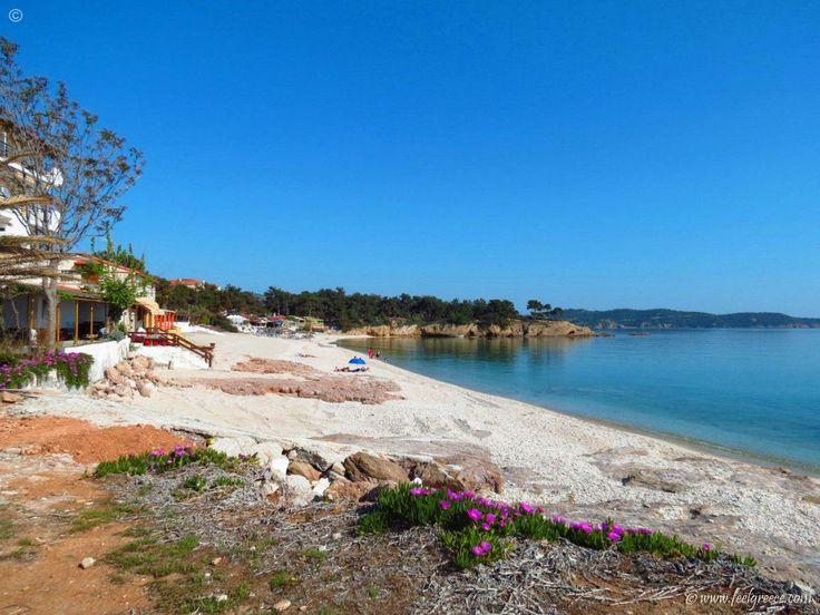 Pefkari - hotels, campsite and Blue Flag awarded beach - Thassos Island