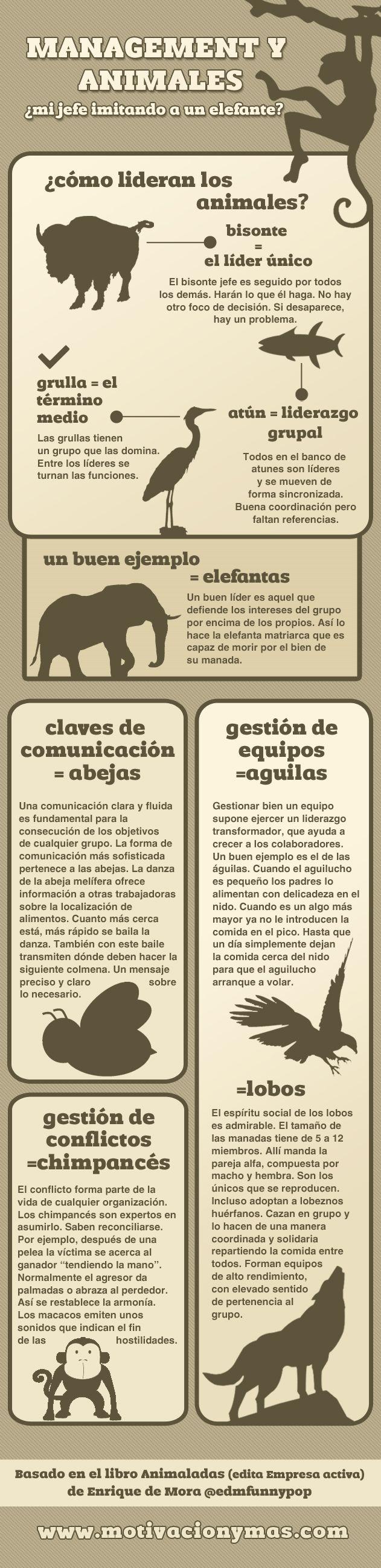 Mangement y animales #infografia