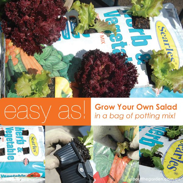 How to grow vegetables in a bag of potting mix #easterdiy #aboutthegarden