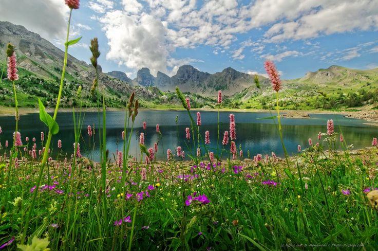 Magnifique prairie en fleurs au bord du lac d'Allos (alt. 2220 m) - Parc national du Mercantour, Alpes-de-Haute-Provence