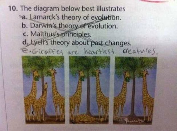 29 Funny Test Answers - Giraffes are heartless creatures.