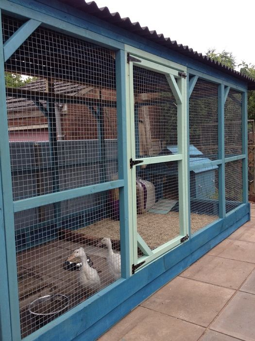 Best 25 chicken enclosure ideas on pinterest hen house for Chicken enclosure ideas