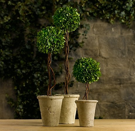preserved boxwood topiary from Restoration Hardware...not so bad $ wise.  reasonable by RH standards...and anything is better than silk flowers