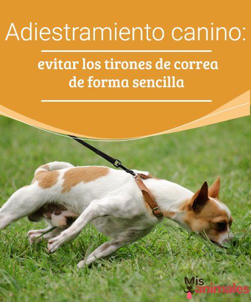 Adiestramiento canino: evitar los tirones de correa  Si quieres pasear con tu perro de una forma relajada y sin tirones de correa, te lo explicamos a continuación.