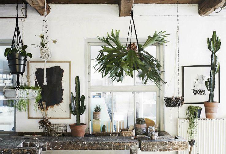 . . plants everywhere . .