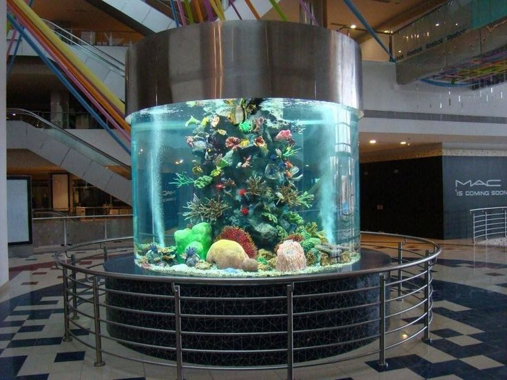 Best Fish Tanks Images On Pinterest Amazing Fish Tanks - Acrylic aquariumfish tank clear round coffee table with acrylic