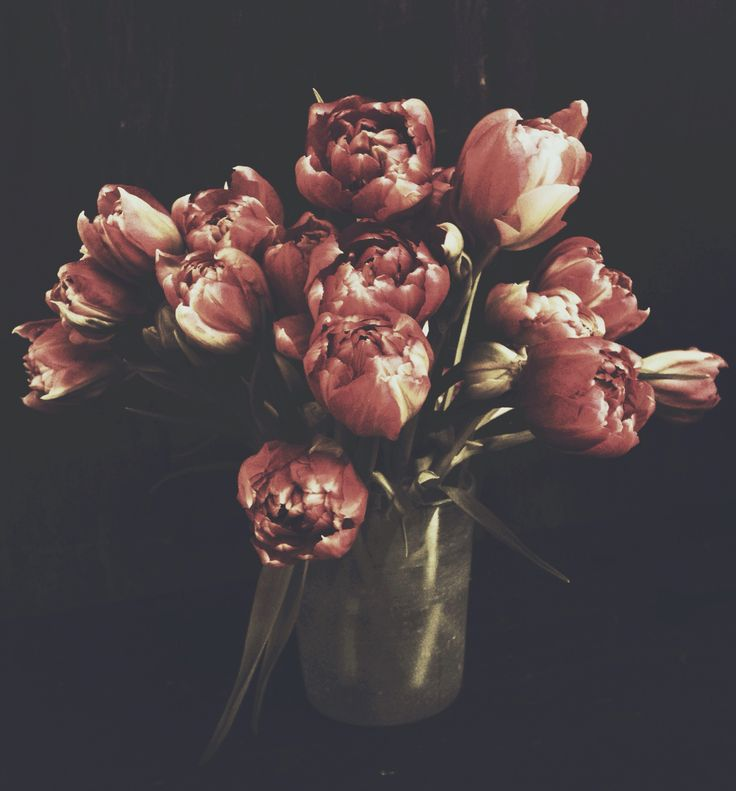 Tulips - still life floral photography