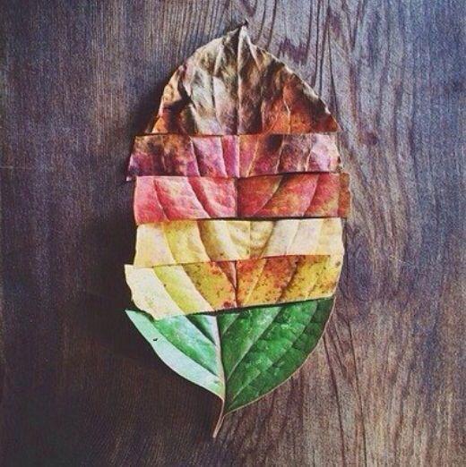 Supertof idee om met kinderen te werken rond bomen, bladeren, herfst, ...
