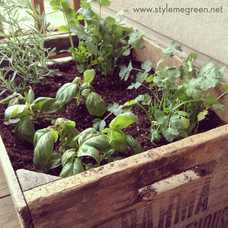 Diy Container Herb Garden Garden Pinterest