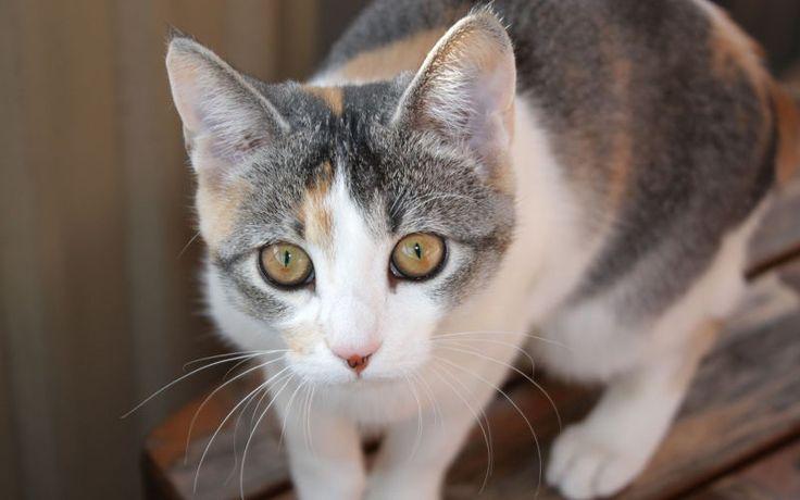 Czy podawać kotu preparaty witaminowo-mineralne?