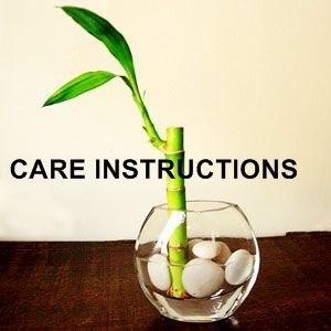 "Lucky Bamboo Plant Care Instructions AND fun little facts about the meaning behind the ""Lucky Bamboo Plant"" - I didn't know half of this!!"