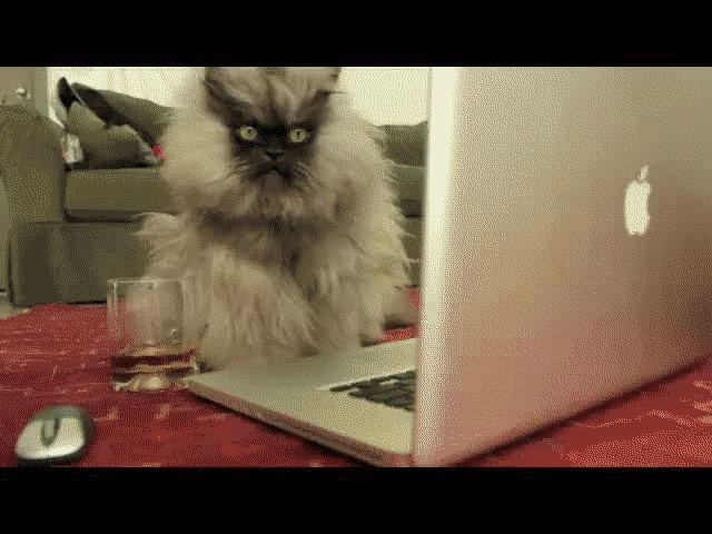 Colonel Meow on Facebook (gif)