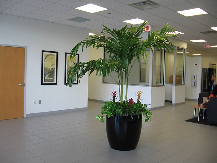 19 best images about office plants on pinterest office plants productivity and snake plant