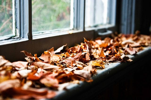 Autumn leaves on the window seal
