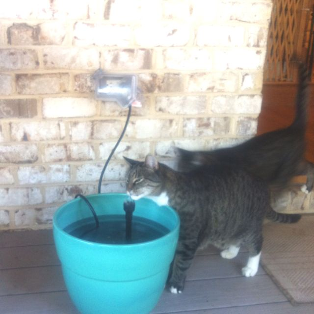 DIY pet water fountain - use small pond water pump and a planter without a hole in the bottom.  My cat loves the running water.