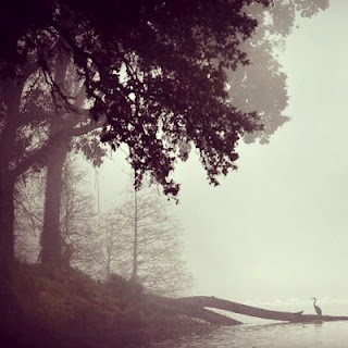 Mi bayou mornings lsu lakes louisiana beautiful foggy mornings